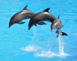 Delfiner der springer under delfinshow i delfinarium
