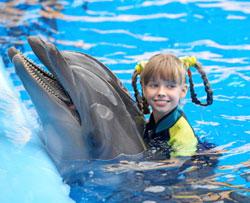 Pige der svømmer med delfiner